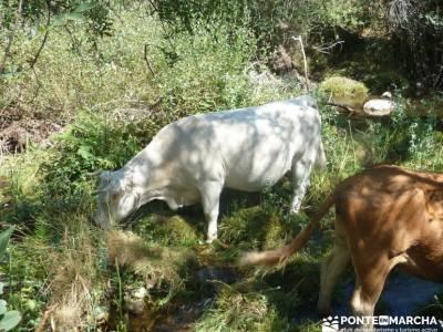 Pesquerías Reales y Fuentes de La Granja;actividades single madrid excursion desde madrid